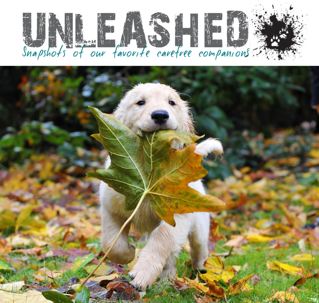 unleashed photo 1