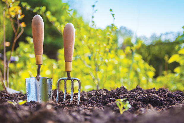 Strategies for Your Investment Garden